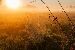 Spider Web with dew in the rays of Sunrise Stock Images