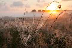 Spider Web with dew in the rays of Sunrise Stock Image