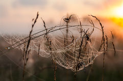 Spider Web with dew in the rays of Sunrise Stock Photo