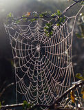 Spider web in dew and sun rays. Photo spider web in dew and sun rays between the branches of shrubs Stock Photos