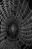 Spider web dewy morning. A spider web is laced with tiny beads of dew on a cool spring morning Royalty Free Stock Photos