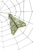 Spider Web and dollar Royalty Free Stock Image