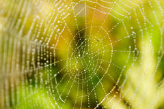 Spider Web with droplets Stock Photos