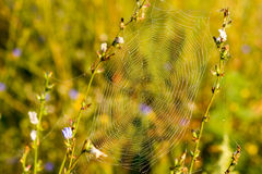 Spider Web with droplets Royalty Free Stock Photos