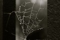 Spider web with droplets on the cage. Is great for your online presentation, printed materials, graphics, design, roll up, banner, details Stock Photography