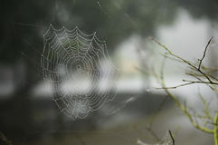 Spider web with the drops Stock Photos