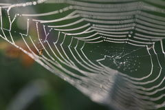 Spider web in drops of dew Royalty Free Stock Photo