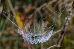 Spider web. With drops of dew, which is similar to a hammock Royalty Free Stock Photos