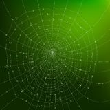 Spider Web With Drops Stock Photography