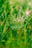 Spider web in drops Stock Image