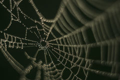Spider web, drops of water, diamonds Royalty Free Stock Photography