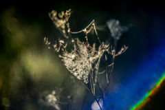 Spider web. On dry branch of plant royalty free stock photo