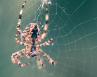 Spider on the web E Royalty Free Stock Photos