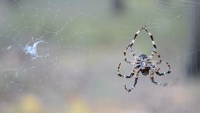 Spider on the web, environment diversity, stock video