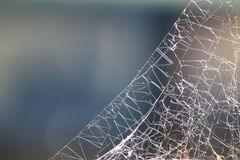 Spider web. Extreme close up of spider web in sun. Blurred background Stock Photography