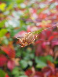 Spider. Web and fall colors Stock Image
