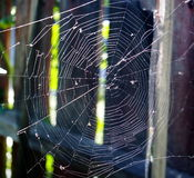 Spider Web On Fence Stock Photos
