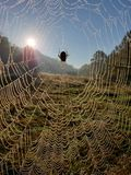 Spider web on a Fence in early morning. Fog stock image