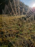 Spider web on a Fence in early morning. Fog stock photography