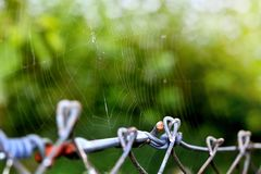 Spider web. On a fence in a nature Stock Images
