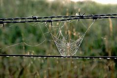 Spider Web on Fence. A spider web, spiderweb, spider`s web, or cobweb from the archaic word coppe, meaning `spider` is a device created by a spider out of Royalty Free Stock Images