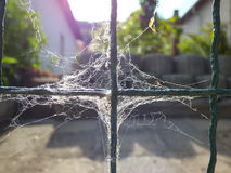 Spider web on fence Royalty Free Stock Photography