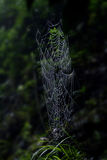 Spider web. In the field of spiders weave a net, in spite of the rain still intact stock photography