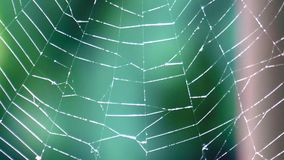 Spider web is flowing from the wind. On a background of green forest stock footage