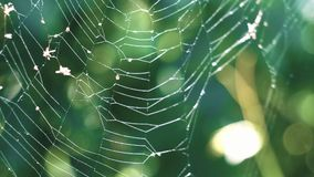 Spider web is flowing from the wind. On a background of green forest stock video