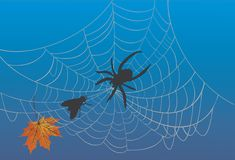 Spider web and fly on blue Royalty Free Stock Images
