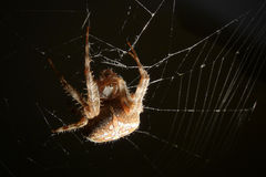 Spider on web  focus on eyes Stock Images