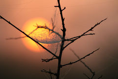 Spider web in the fog of the savanna, Swaziland. Sunrise in the savanna, Swaziland Stock Images