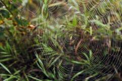 Spider web. Royalty Free Stock Photos