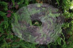 SPIDER WEB in Forest stock photography