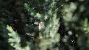 A spider on a web in the forest. stock video