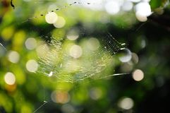 Spider web Stock Photography
