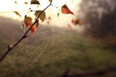 Spider web at forest Stock Photography