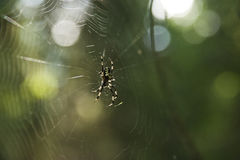Spider on a web. In a forest close-up Stock Images