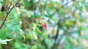Spider web in the forest. Close-up view. stock video
