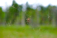 Spider on a web in the forest closeup Stock Images