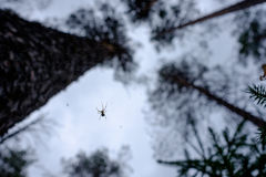 Spider on a web in the forest closeup Stock Image