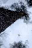 Spider on a web in the forest closeup Royalty Free Stock Photo