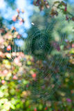 Spider web in a forest,bokeh background Stock Images