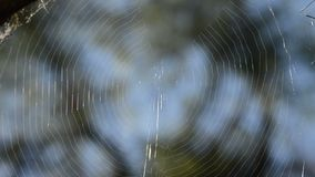Spider web in the forest stock video footage