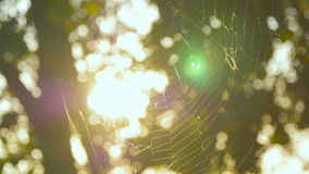 Spider web in a forest stock footage