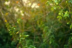 Spider Web Formed on Green Leaves royalty free stock photo