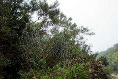 Spider web and forrest in greece Royalty Free Stock Photo