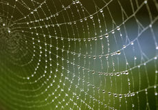 Spider Web with Fresh Dew Drops in the Morning Royalty Free Stock Photo