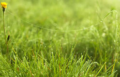 Spider web on fresh green grass Stock Photos