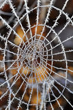 Spider web with frost Royalty Free Stock Photos